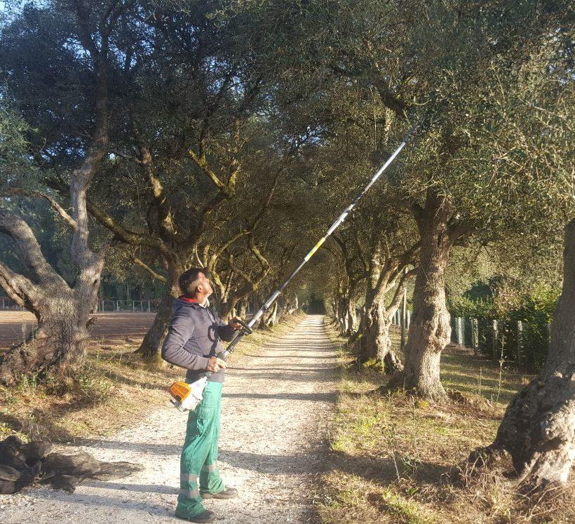 Gran acollida na xornada de cultivo e poda da oliveira organizada pola APAAG